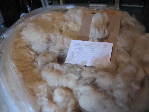 Belle's 2009 raw fleece