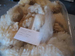 Danielle's 2008 raw fleece in bag