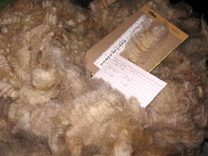 Glinda's 2009 raw fleece in bag
