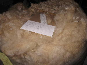 Hershey's 2009 raw fleece