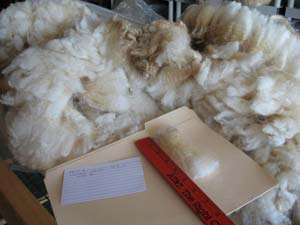 Kettie's 2010 raw fleece in bag